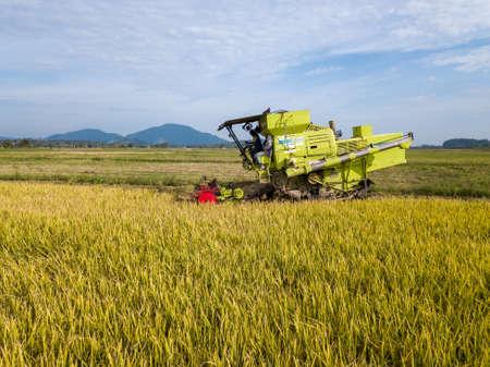 Penanti, Penang/Malaysia - Aug 27 2019: Paddy harvester reaping rice crop. Redakční