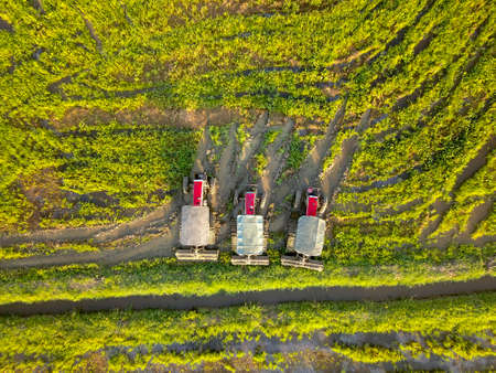 Asia farming machine tractor in rice paddy field in morning. Malaysia main agriculture.