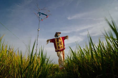 Scarecrows in red shirt in Malaysia kampung paddy field.