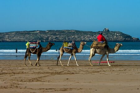 traditon: Camels at the shore of Atlantic ocean at Essaoira, Morocco Stock Photo