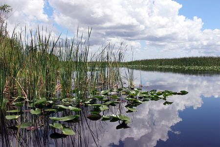 sawgrass: Everglades National Park, Florida