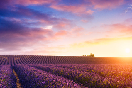 Beautiful sunset over the lavender fields in Valensole, France Stock Photo