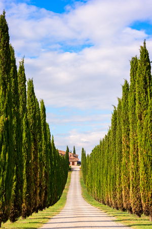 Beautiful Tuscany, cypresses and shining road in green meadow Stock Photo
