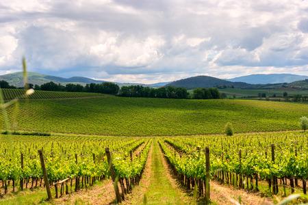Chianti vineyard landscape summer in Tuscany, Italy Stock Photo