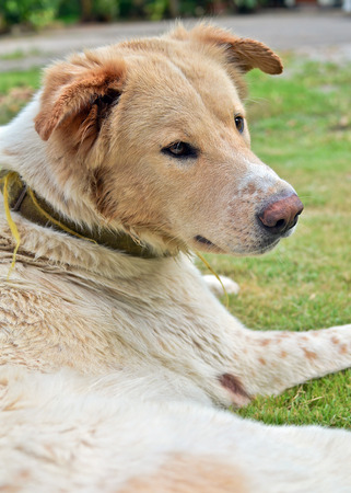 dogie: Dog sitting. Stock Photo