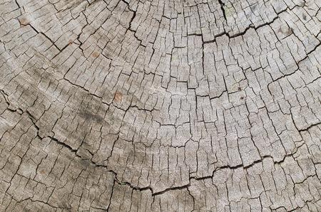 Old wood background. photo