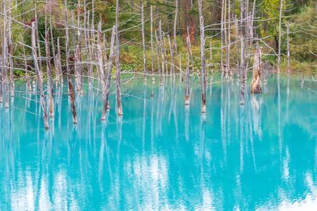 blue pond in Biei, Hokkaido Japan. Standard-Bild - 110095770