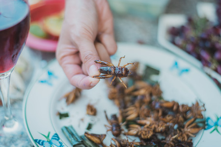 Fried insects in hand, Thai street food. Standard-Bild - 110095802
