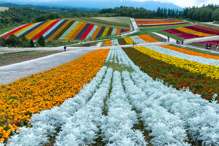 Shikisai-no-oka Farm beautiful flowers farm colorful hill at Biei, Hokkaido, Japan. Standard-Bild - 110095835