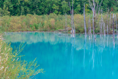 blue pond in Biei, Hokkaido Japan. Standard-Bild - 110097189