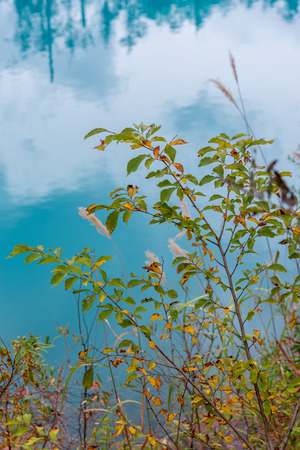 green leaf with background blue pond in Biei, Hokkaido Japan. Standard-Bild - 110097190