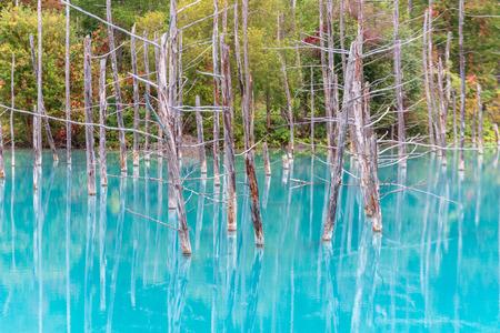 blue pond in Biei, Hokkaido Japan. Standard-Bild - 110097237
