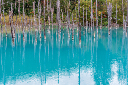 blue pond in Biei, Hokkaido Japan. Standard-Bild - 110097238