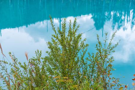 blue pond in Biei, Hokkaido Japan. Standard-Bild - 110097259