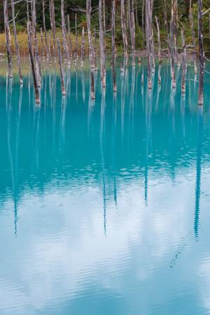 blue pond in Biei, Hokkaido Japan. Standard-Bild - 110097260
