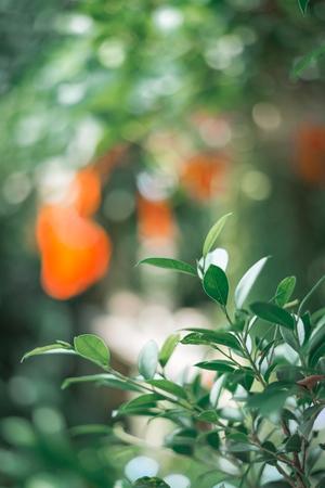 green leaf on tree, vintage tone Standard-Bild - 110097263
