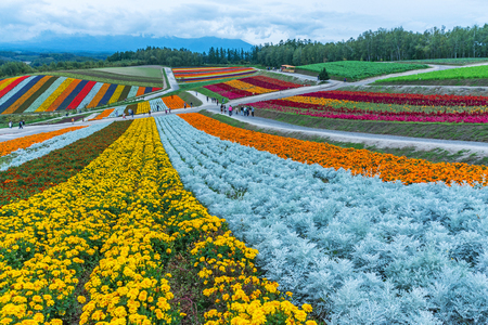 Biei, Hokkaido, Japan - September 27, 2018: shikisai-no-oka Farm is one of the many farms in the hokkaido beautiful flowers farm colorful hill at Biei, Hokkaido, Japan. Standard-Bild - 110053128