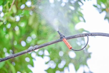 fog spray in garden Banco de Imagens