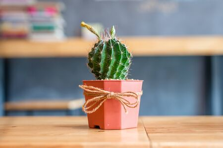 cactus in pot on wood  desk.