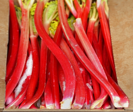 Fresh organic rhubarb fruit sold on market photo