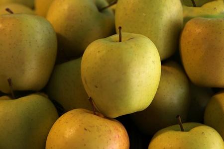 gold rush: Fresh organic yellow gold rush apples pile