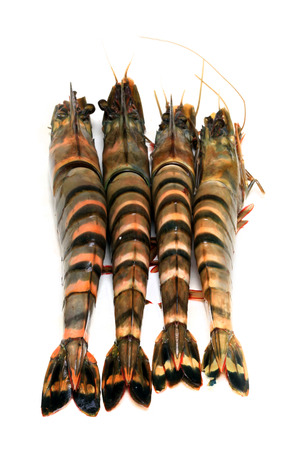 Raw tiger shrimps ready to be cooked photo