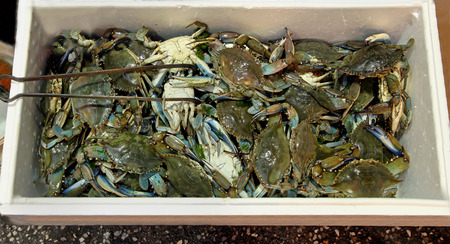 sold small: Freshly caught small crabs pile sold on fish market Stock Photo