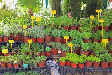 sold small: Small house plants in flower pots sold on market