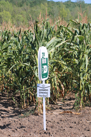 POZAREVAC, SERBIA - August 03: Corn crop sign that marks genetically modified seeds used to saw in Pozarevac, Serbia - August 03, 2017; The Maize Research Institute Zemun Polje is the leading organization for development of new high-yielding quality seeds