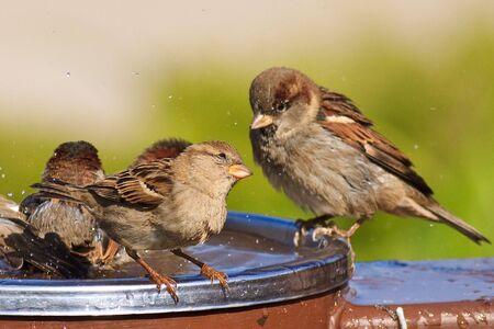 Cute birds looking at each other in a bird bath