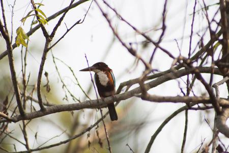 kingfisher: Kingfisher on a tree