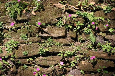 purple flower: purple flower on green ground