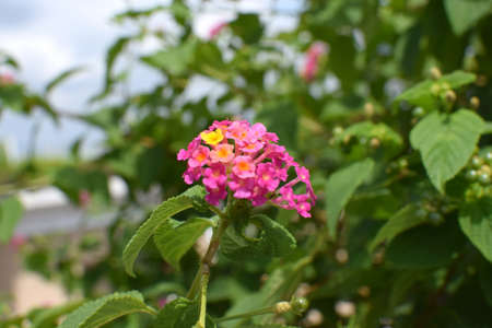 pink flower and green leaves plants