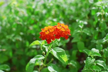 red flower and green leaves plants Stock Photo