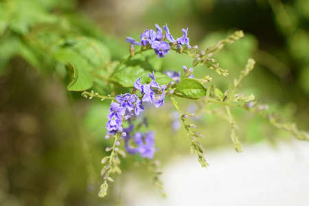 purple flower and green leaves plants