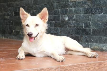 white dog: White dog