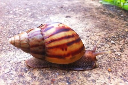 despacio: Sustento Caracol en el jardín