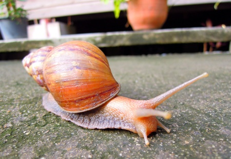 livelihood: Snail livelihood in garden Stock Photo