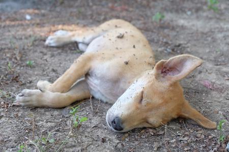 land mammal: ragged dog on ground Stock Photo