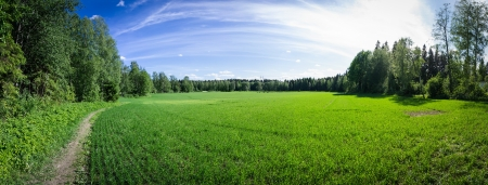 Panoramic view of a summer field in Finland