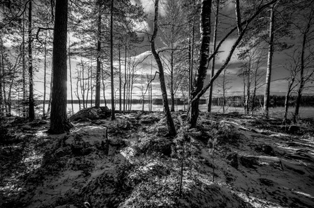 First snow on the ground in forest with a lake on the background photo