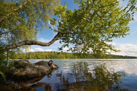 Beautiful summer day on a lake in Finland with a tree reaching above the water Stock Photo