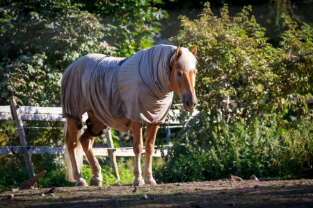 Horse clad in the warp and standing behind a fence