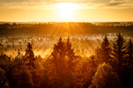 Sun rising on an early morning at the Torronsuo Swamp in Finland. The sun shining bright on golden sky. photo