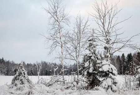 next horizon: Trees covered in white snow next to a snowy field in the winter.Very cold weather and forest in the horizon. Stock Photo