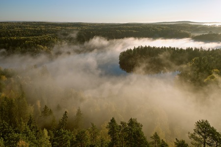 early fog: Thick fog covering the forest and the lake in early morning landscape. Peaceful view from the Aulanko lookout tower in Finland.