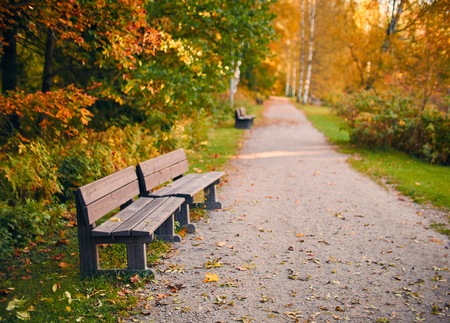 Empty wooden par bench in autumn scenery with fall colors and very shallow depth of field. Stock Photo