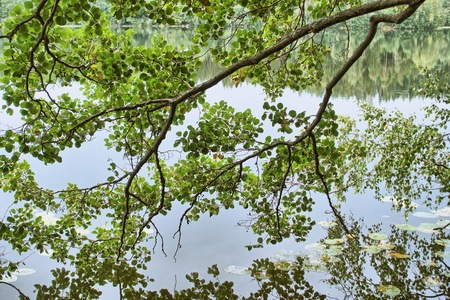 Green springtime tree branch  above a lake and still water on the background. Stock Photo