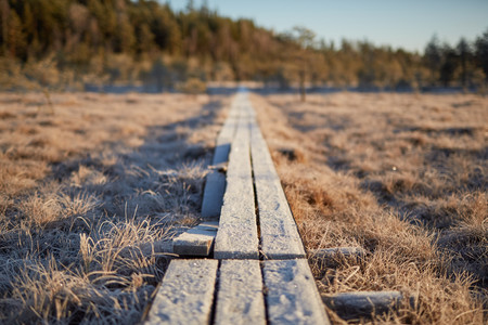 Background with boardwalk in the middle of frozen swamp in the autumn of Finland