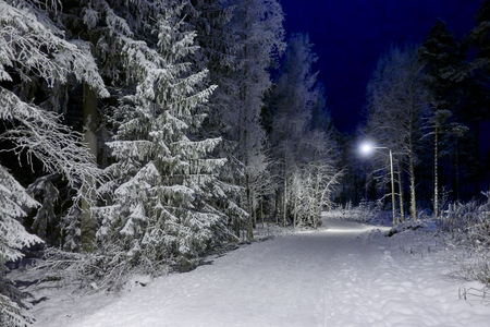 Peaceful winter night and beautiful blue sky. Snow cowered trees in very cold weather in Finland.